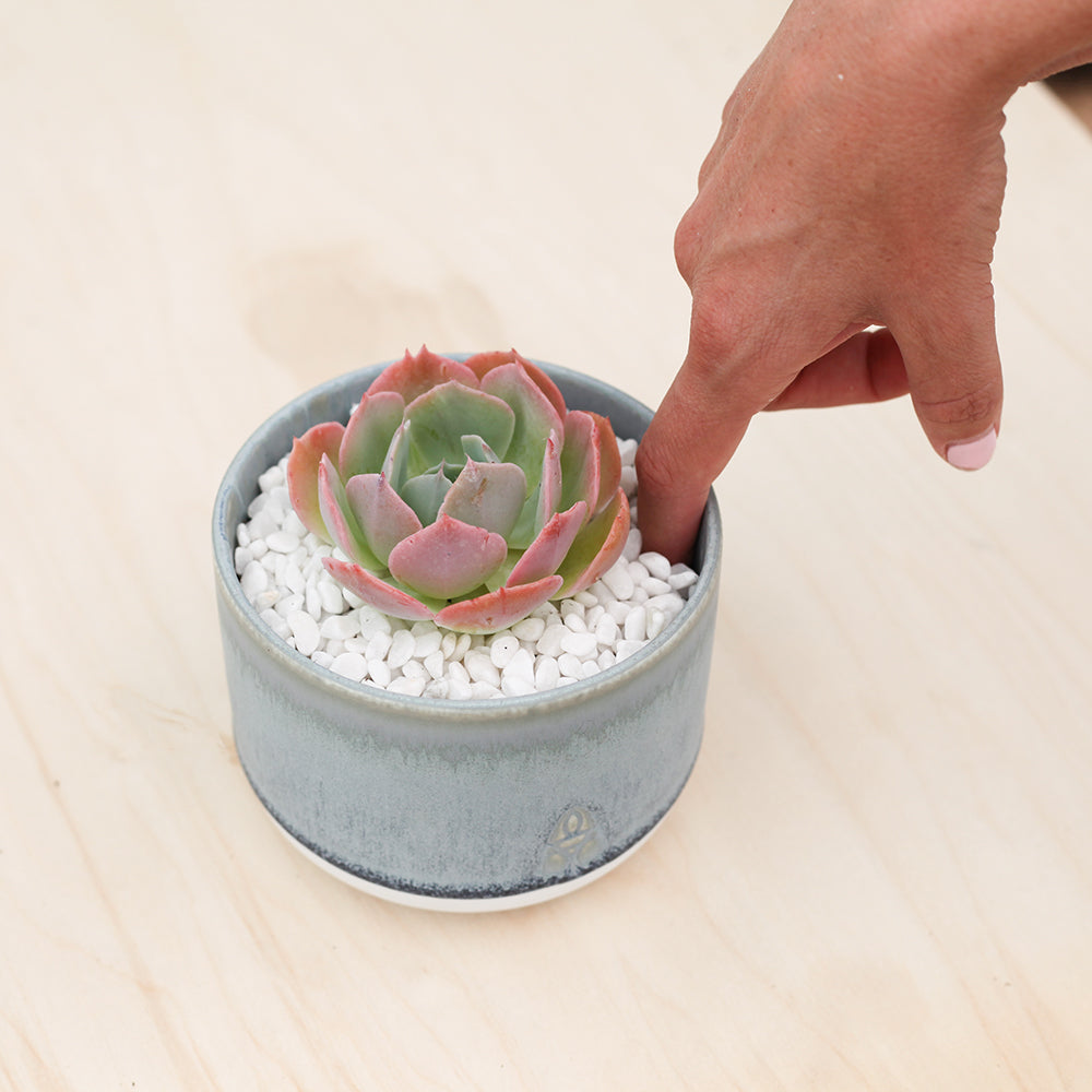 How To Water Succulents Leaf Clay