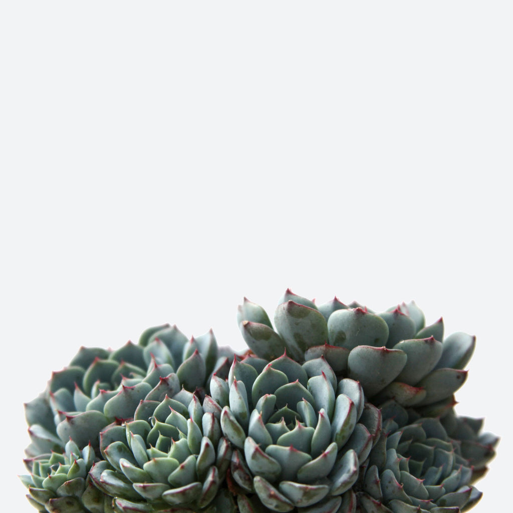 leaf u0026 clay premium succulents