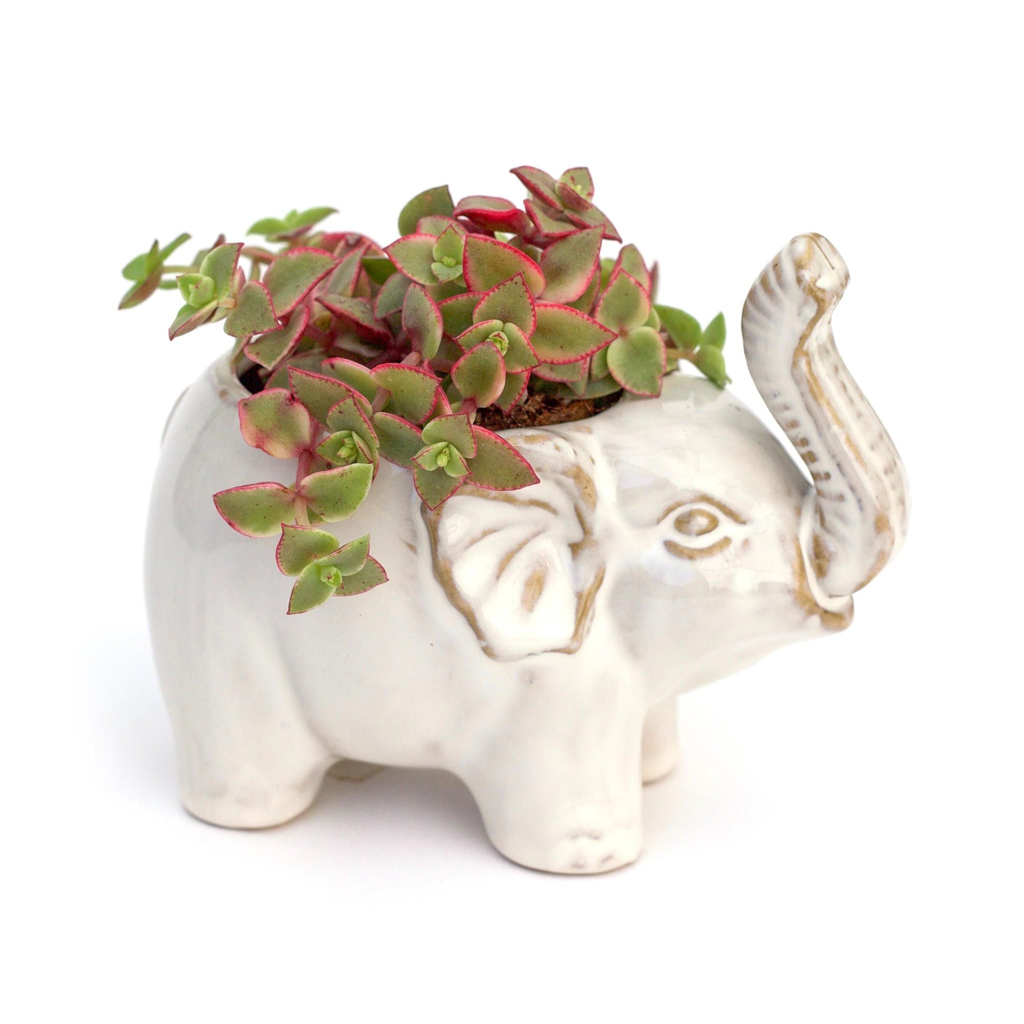 'Ellie' Pot