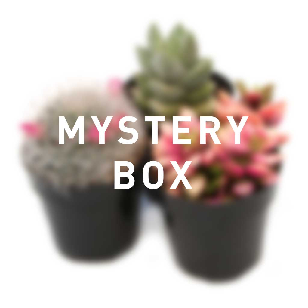 The Plant Mail Club - Monthly Subscription