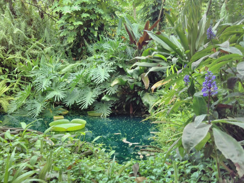 The The Eden Project Tour with Dan Ryan, the lily pond - BSEP Academy ladies visited August 2018