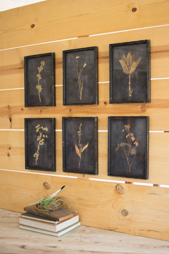 set of 6 botanical prints under glass