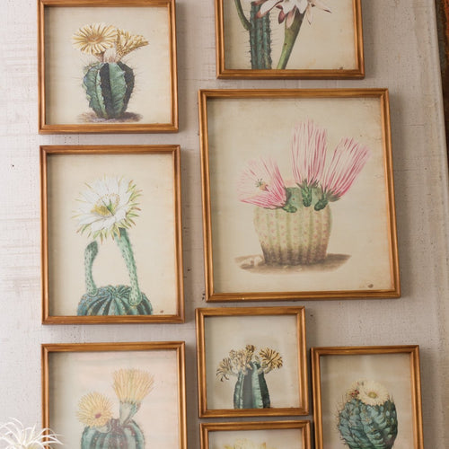 Set of 9 Assorted Cactus Flower Prints - Wall Decor - Delirious by Design