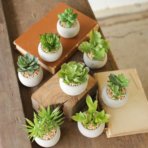 Set of 8 Small Succulents With Round Cement Pots - House Decor - Delirious by Design
