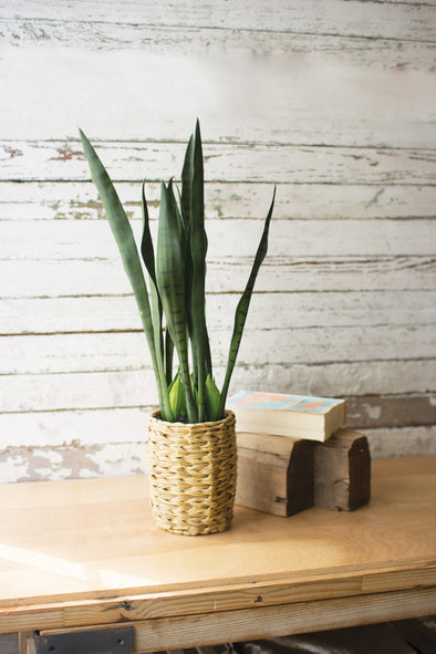 artificial snake plant in a woven seagrass pot