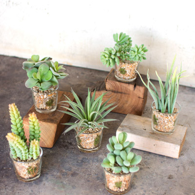 Set of 6 Artificial Succulents in Glass Containers - House Decor - Delirious by Design