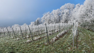 Winter Wein