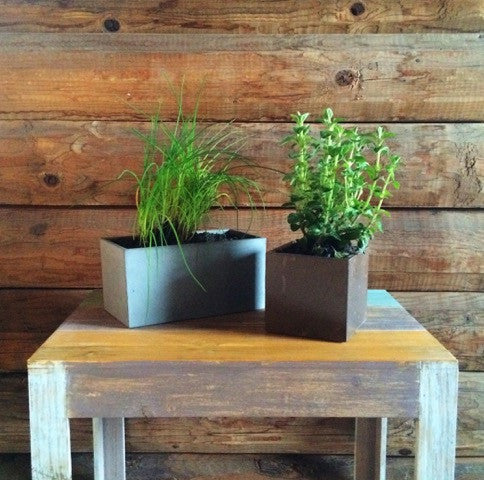 "It's a Good ""Thyme"" to Plant an Indoor Herb Garden"