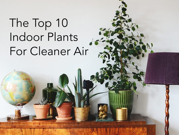 Best Indoor Plants for Clean Air (And How to Manage Them)