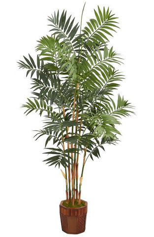 A tall bamboo palm in a fancy brown pot. The bright green palm leaves sit upon tall, thin, bamboo-looking stalks.