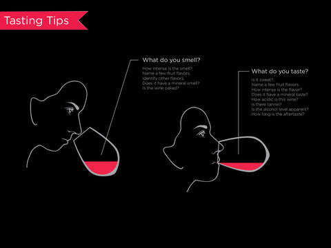 An infographic explaining what to look for during a wine tasting.