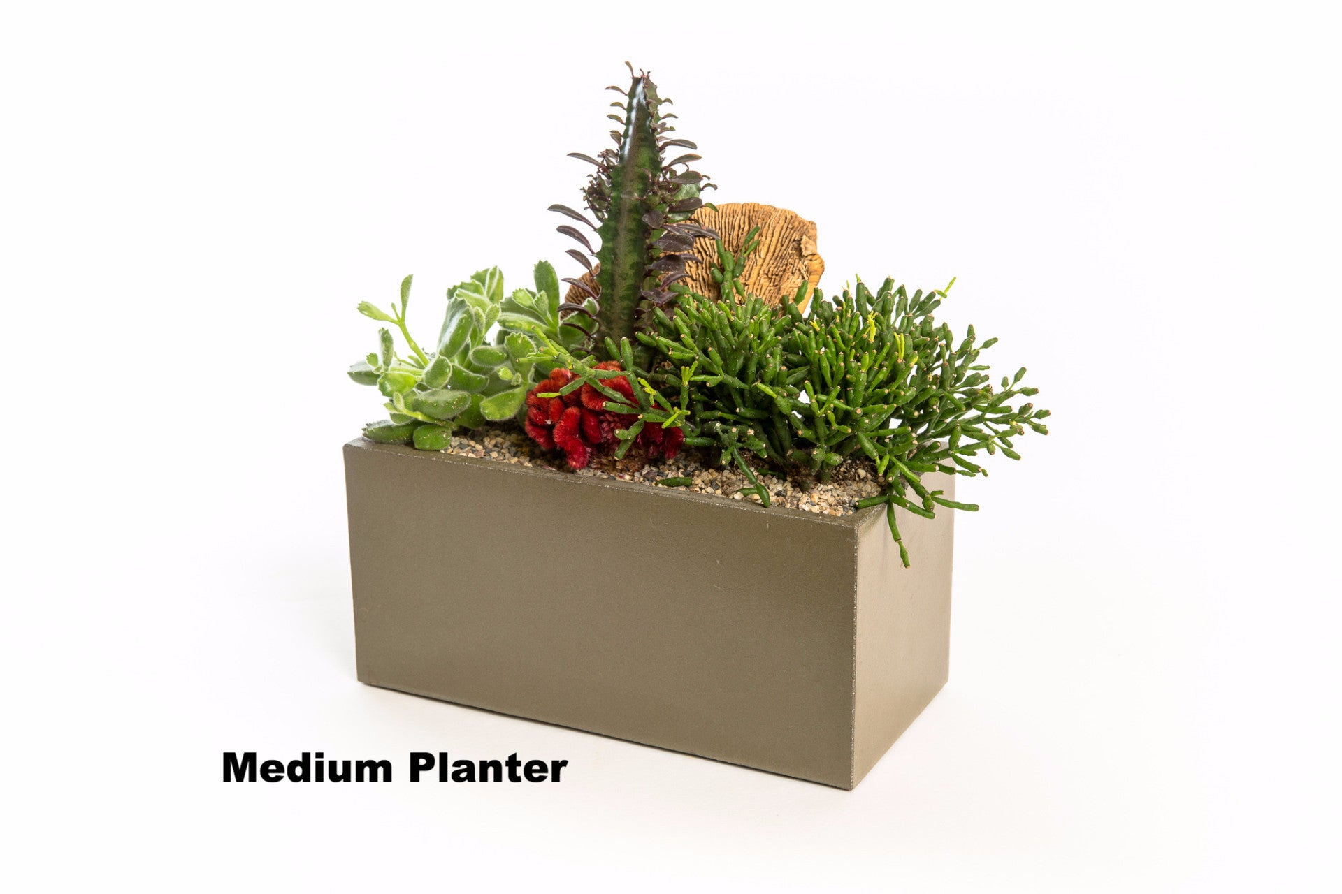 com dp decorative with planter kitchen nearly amazon home natural cactus garden cement