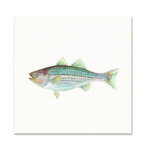 Coastal Wall Art. Watercolor Bass.