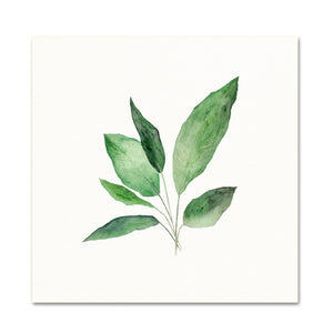 Botanical Art. Watercolor Plants.
