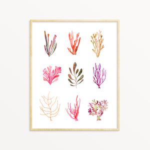 Coastal Wall Art. Watercolor Sea Life.