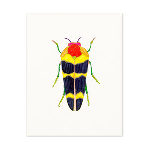 Beetle No. 11