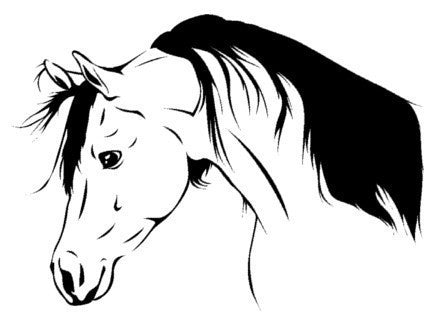 Horse decal-Arabian-Horse sticker-Vinyl wall decal-23 X 31 inches
