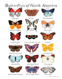 Butterflies of North America Print