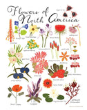Flowers of North America Print