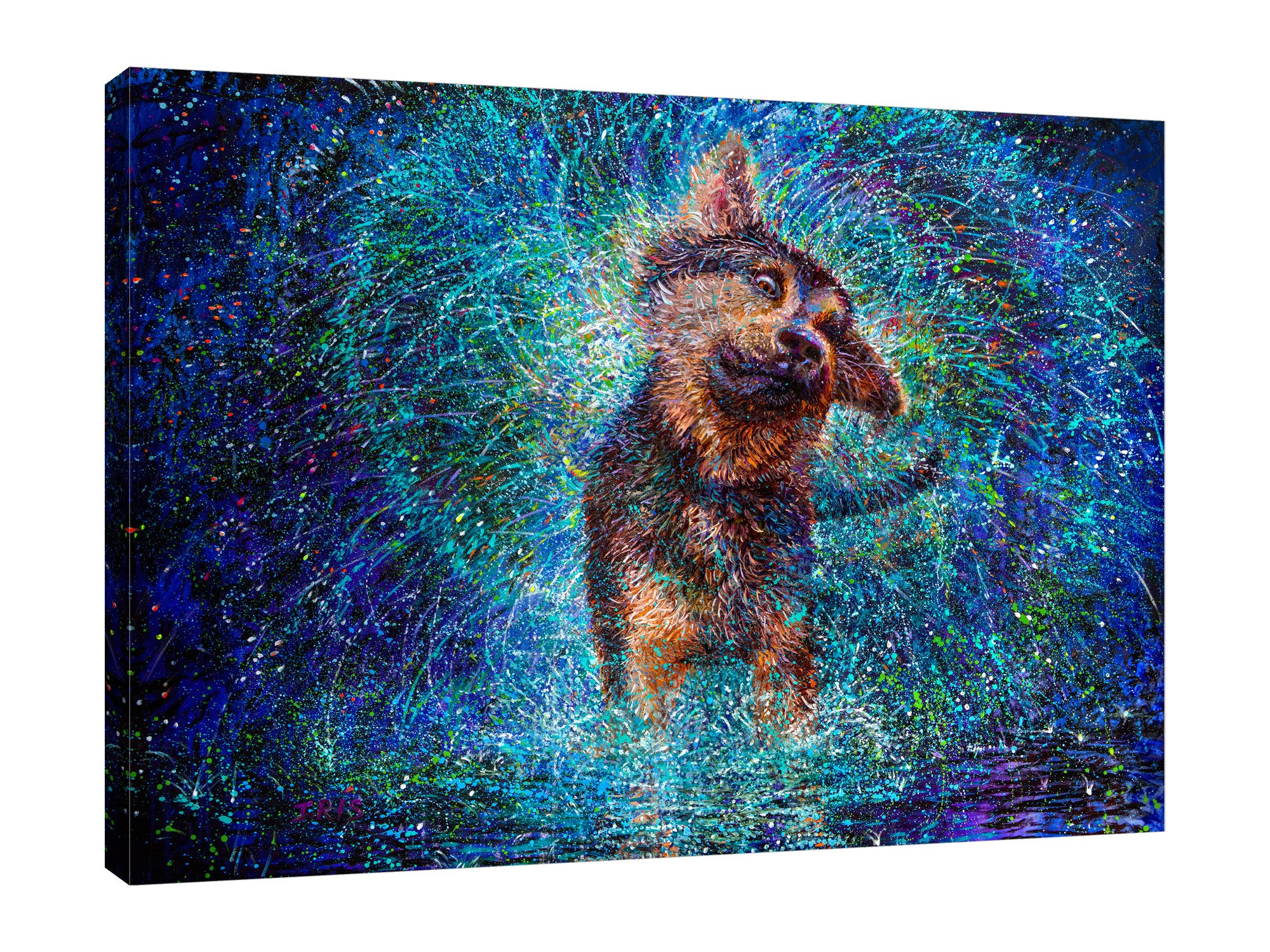 Iris-Scott,Modern & Contemporary,Traditional,Animals,finger paint,surreal,splatter,shaking,dog,wet dog,shepherd,blue,green,night,canine,Red,Charcoal Gray,Sea Green,Gray,Black