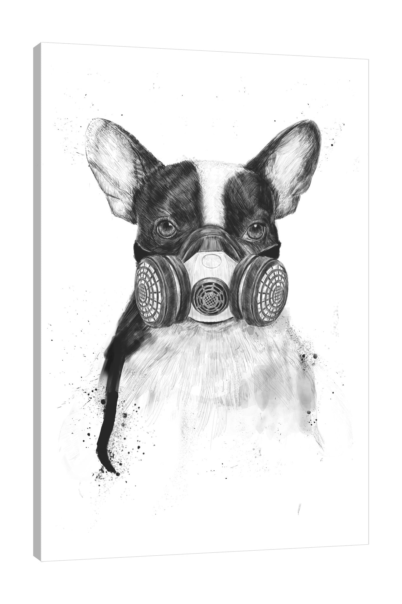Balazs-Solti,Modern & Contemporary,Animals,animals,animal,pug,pugs,black and white,mask,masks,face mask,face masks,splatters,splatter,Mist Gray,Tan White,Charcoal Gray,Gray,White
