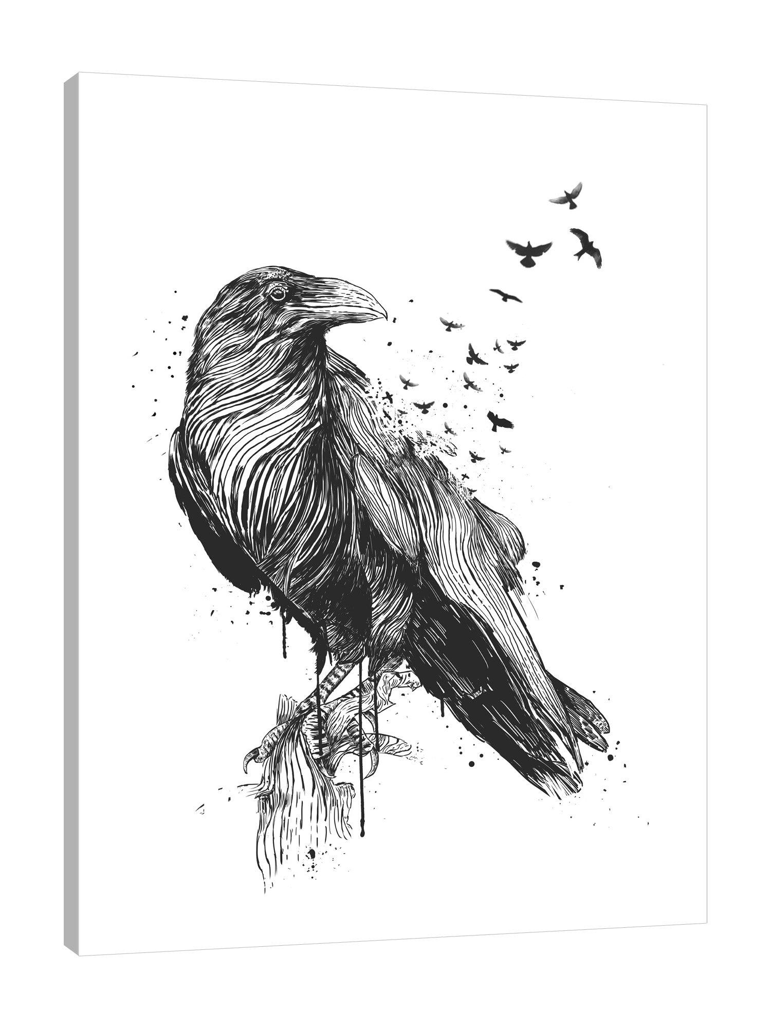 Balazs-Solti,Modern & Contemporary,Animals,animals,animal,bird,birds,crow,crows,paint drips,paint drip,drips,drip,black and white,splatters,splatter,Charcoal Gray,Tan White,White