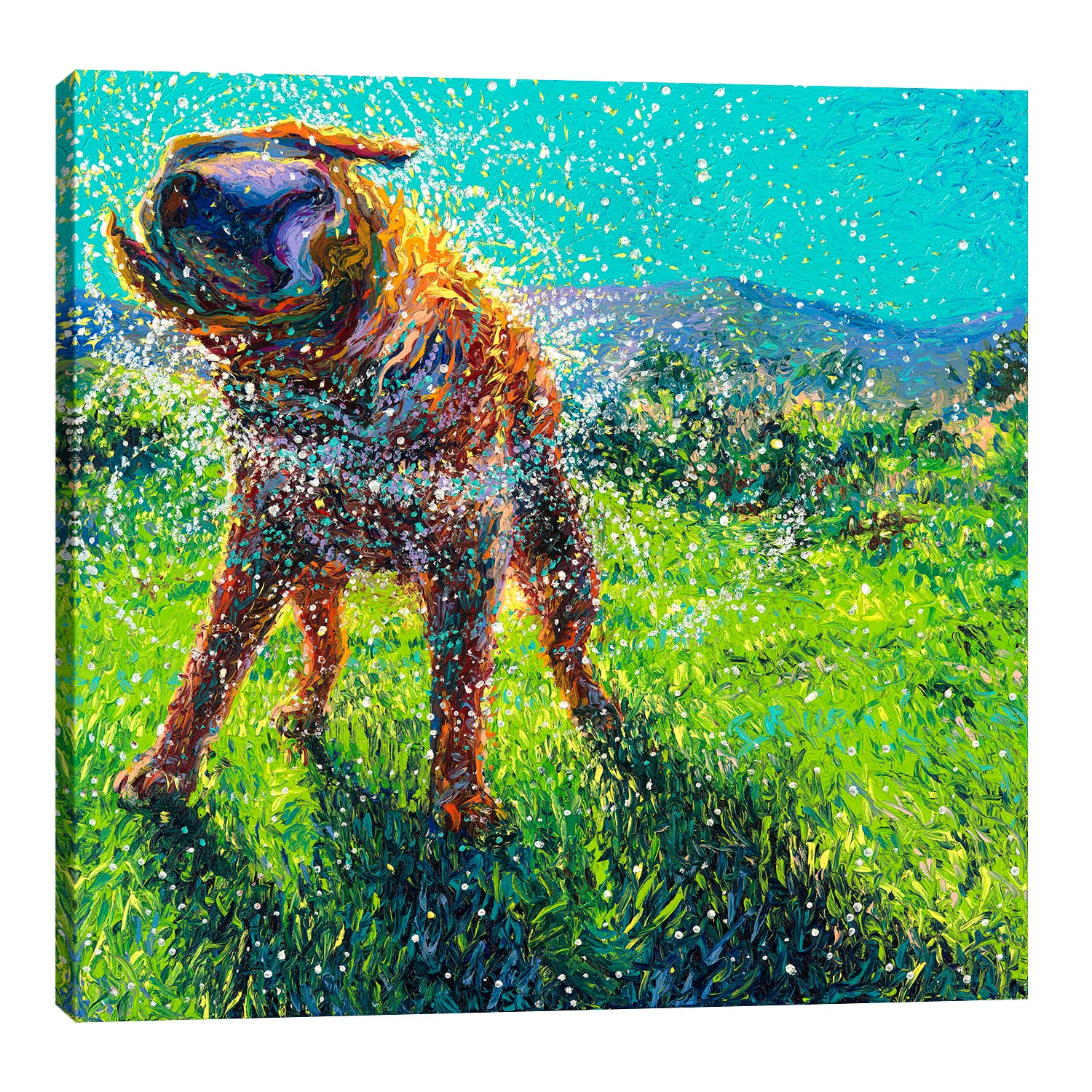 Iris-Scott,Modern & Contemporary,Animals,animals,animal,dogs,dog,wagging,shaking,water drops,grasses,mountains,