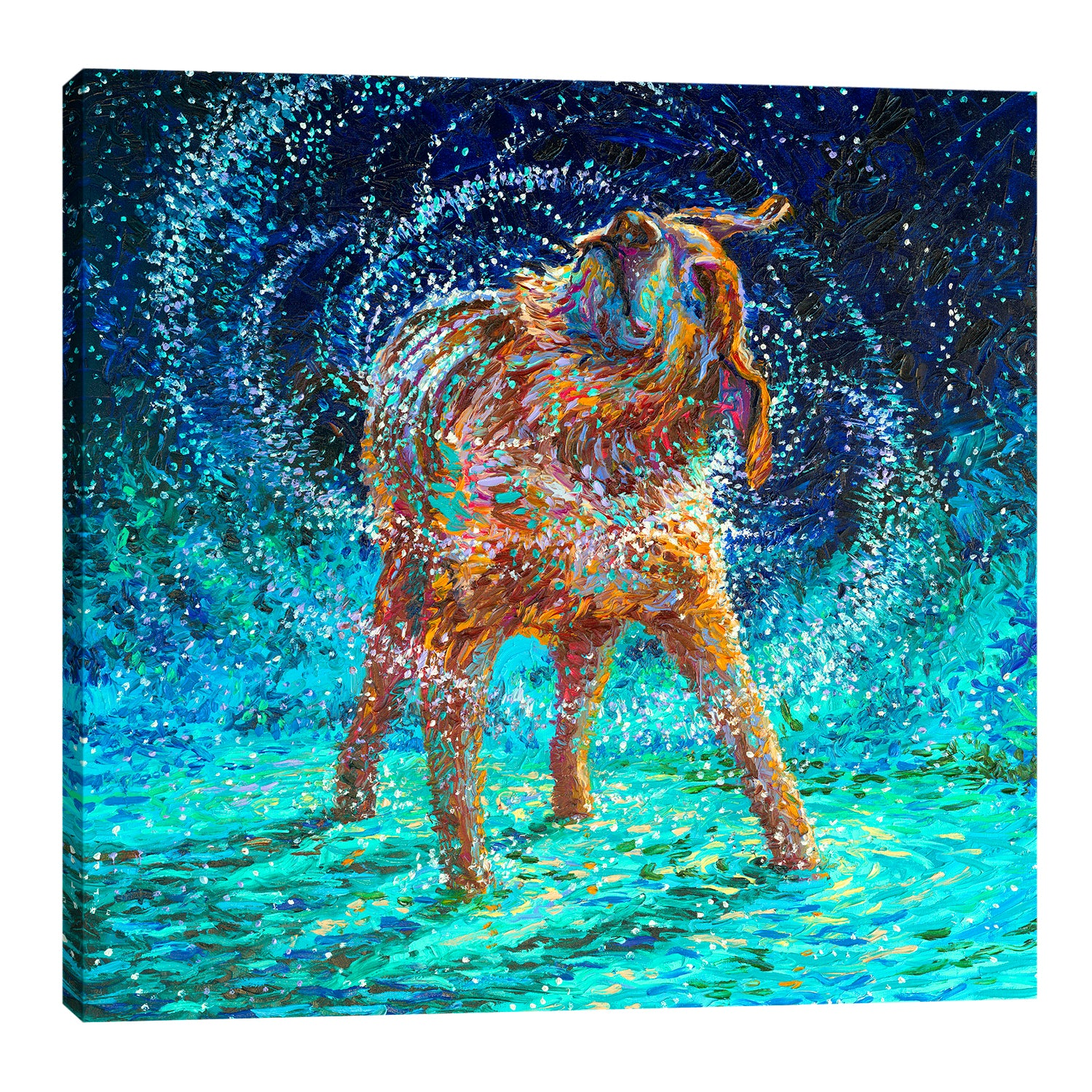 Iris-Scott,Modern & Contemporary,Animals,animals,animal,dogs,dog,wagging,shaking,water drops,teal,splatter,