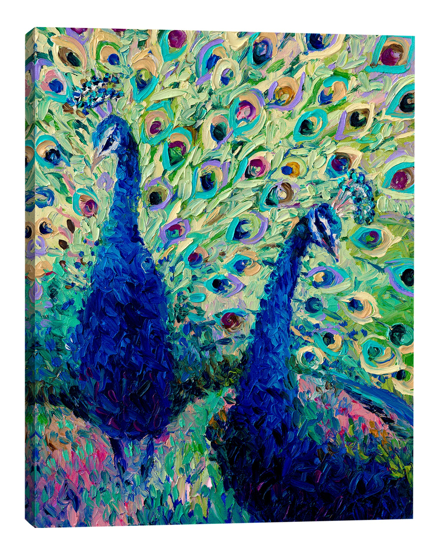 Iris-Scott,Modern & Contemporary,Animals,animals,animal,peacocks,peacock,teal,feathers,
