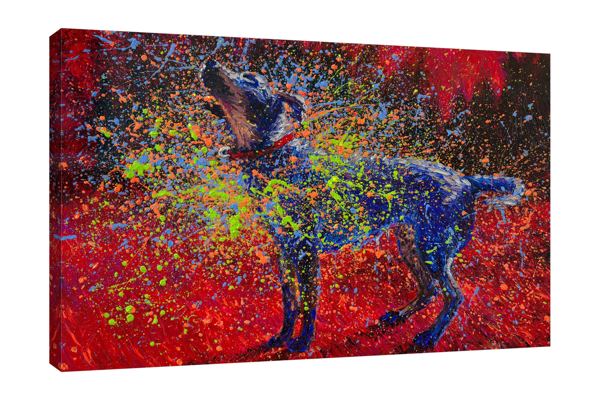 Iris-Scott,Modern & Contemporary,Animals,dogs,animals,big dogs,shake,splatters,