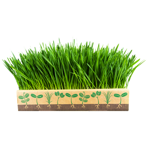 Wheatgrass Box - Home Greens