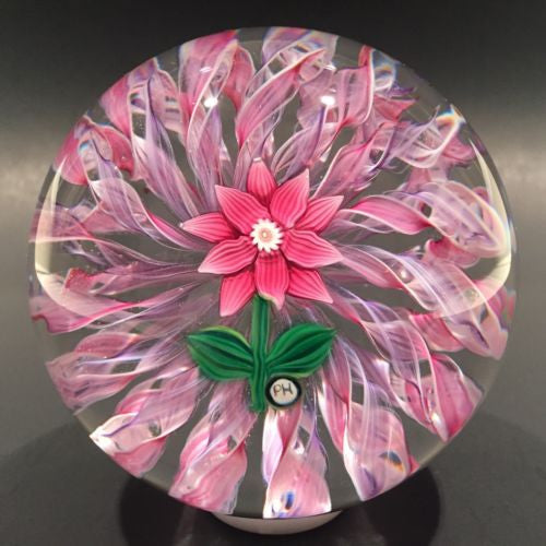 Signed Peter Holmes Selkirk Art Glass Paperweight Floral Pink Latticino
