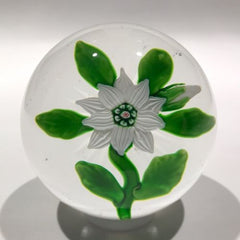 Antique Baccarat Art Glass Paperweight Lampworked White Double Clematis