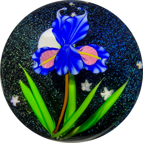 Mayauel Ward 2019 Compound Torchwork Iris in Moonlight on Dichroic Ground