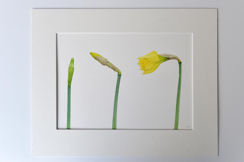 Daffodils watercolour by Mark Azopardi - L'Atelier Natalia Willmott