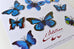 Papillons-decorative butterflies - L'Atelier Natalia Willmott