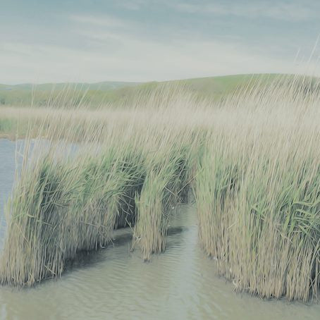 11 - Countryside Reeds