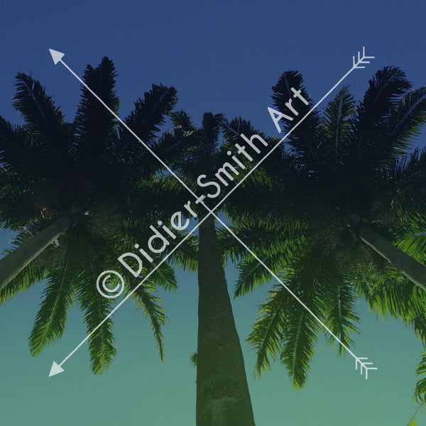 C1312 Vintage palm trees - Didier-Smith Art