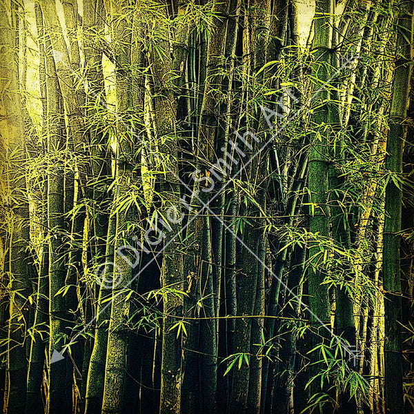 C1318 Light in rainforest - Didier-Smith Art