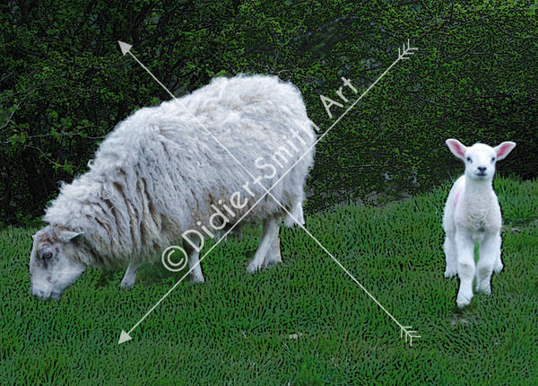 C1401 Sheep and lamb
