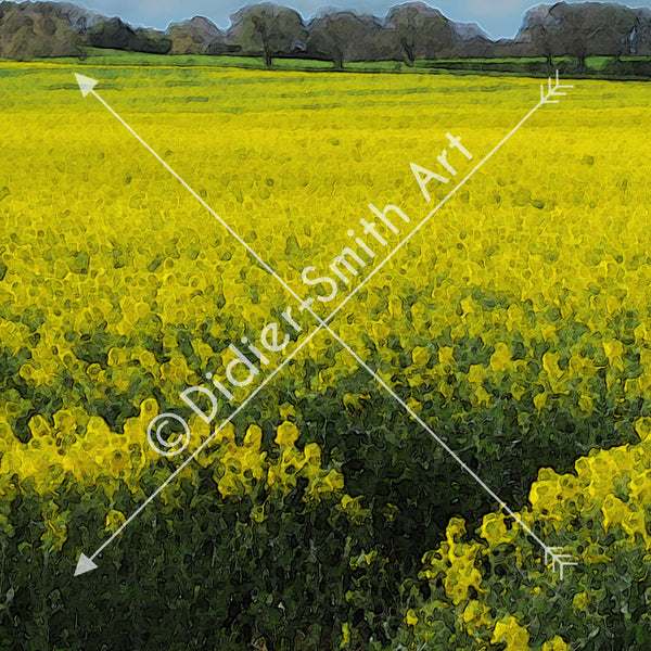 C1406 Field of yellow flowers