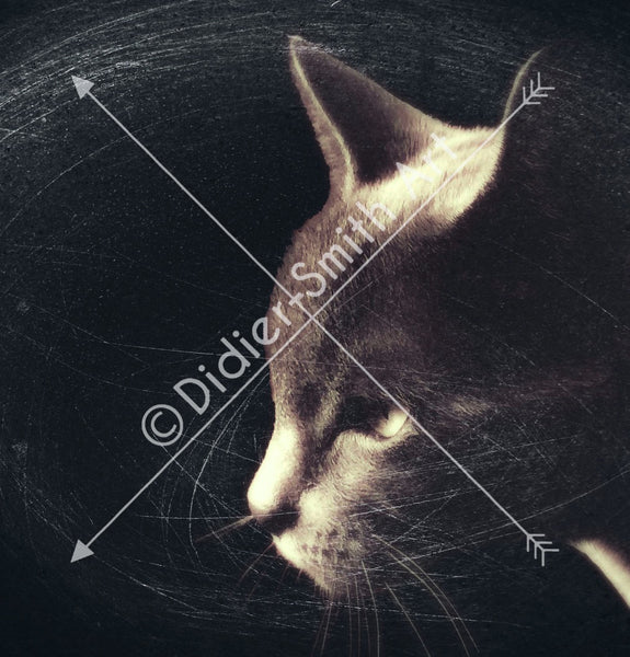 C115 Scratched Cat - Didier-Smith Art