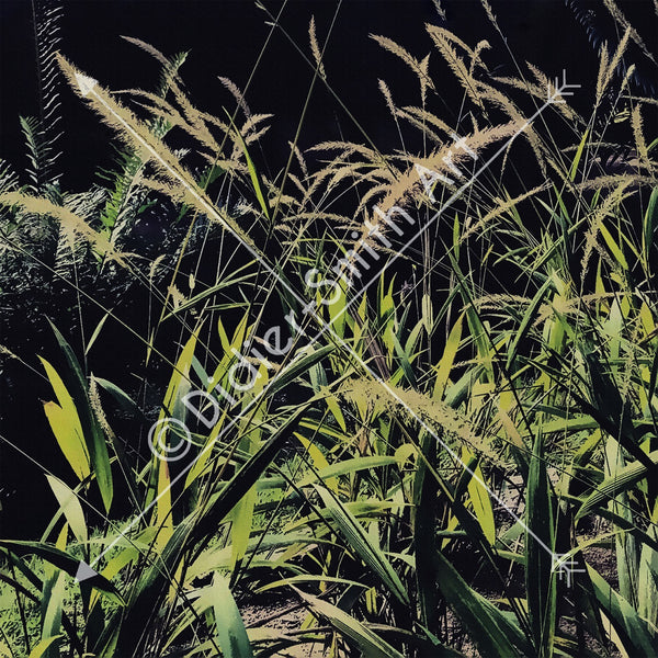C1176 Dark Grass - Didier-Smith Art