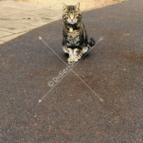 C122 Cat Bishops Palace Gardens - Didier-Smith Art