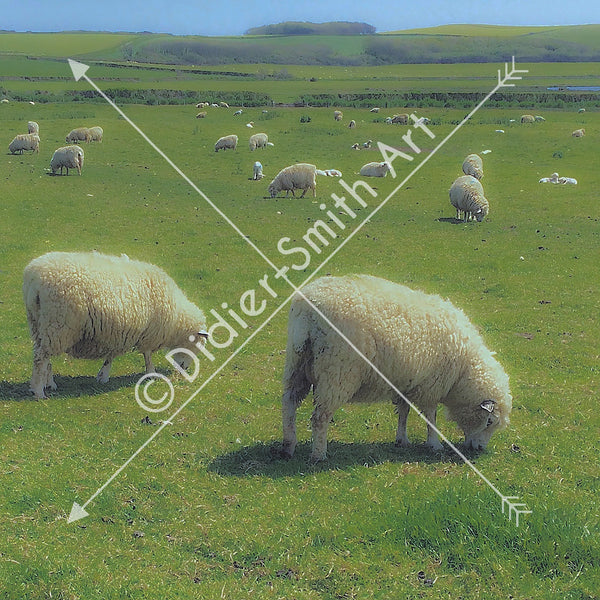 C126 Sheep - Didier-Smith Art