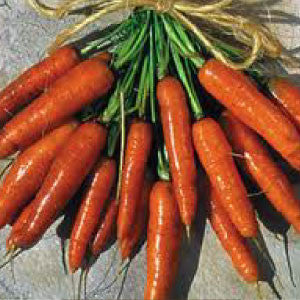 CARROT, Scarlet Nantes - 99¢ Cent Heirloom Seeds: Heirloom,Bulk