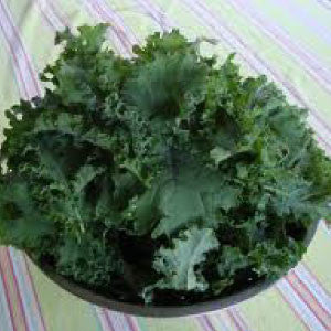 KALE, Premier - 99¢ Cent Heirloom Seeds: Heirloom,Bulk