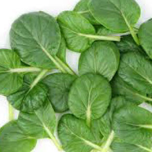 MUSTARD, Tatsoi - 99¢ Cent Heirloom Seeds: Heirloom,Bulk