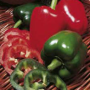 PEPPER, California Wonder - 99¢ Cent Heirloom Seeds: Heirloom,Bulk