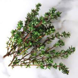 THYME - 99¢ Cent Heirloom Seeds: Herb